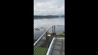 Lake Sammamish, Washington state