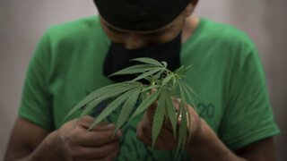 Mexico Close To Legalizing Marijuana