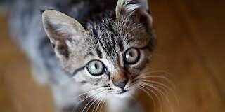 Cats SOO Cute 2021