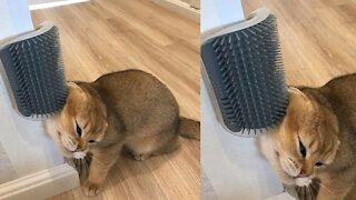 How to help your cat he needs it