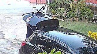 Cat surprises owner with surprise attack!