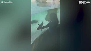 Bimba e pinguino giocano separati dal vetro dell'acquario