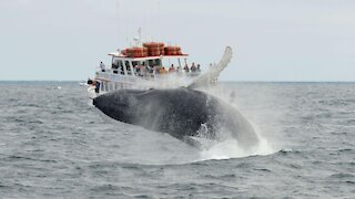 A Lobster Diver In The States Says He Got Swallowed By A Humpback Whale & Spat Back Out