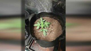 Lawmakers debate legalizing recreational marijuana
