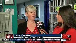 Free Microchip at Kern County Animal Shelter for Holiday Week