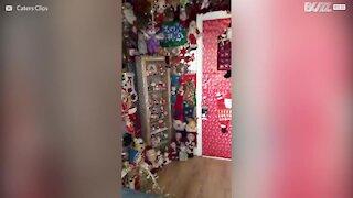 Uomo decora la casa con oltre 300 Babbi Natale!