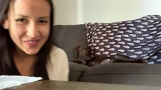 Puppy Hilariously Confronts Owner For Piece Of Her Sandwich