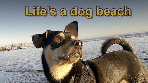 Life's a Dog Beach