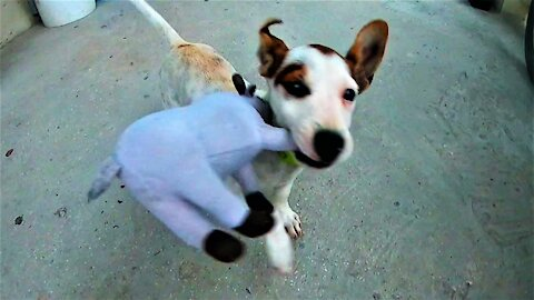 Adorable new puppy is thrilled to receive his first toy