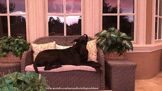 Great Dane enjoys stunning stormy Florida sunset