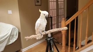Energetic parrot shows off his new tricks