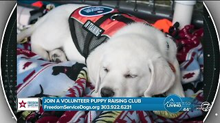Puppies Change Lives! - Freedom Service Dogs