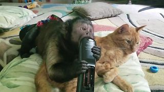 Cat and Capuchin monkey watch TV together