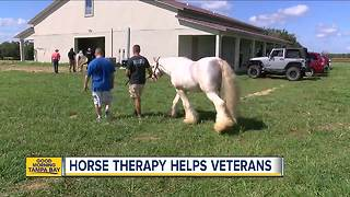 Horse therapy helps vets, kids with disabilities