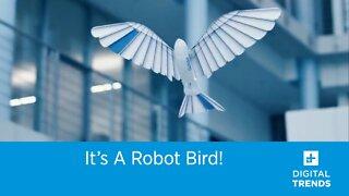 It's a Robot Bird!