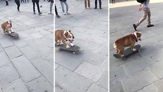 FUNNY MOMENT SKATING BULLDOG SPOTTED IN ITALY