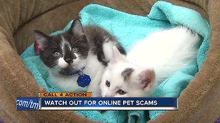 Call 4 Action: Watch out for online pet scams