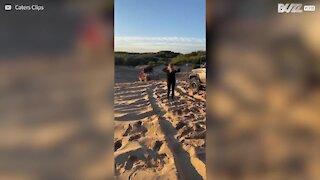 Ces conducteurs font un saut impressionnant sur une dune de sable