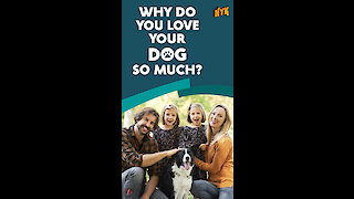 Why do we love dogs?
