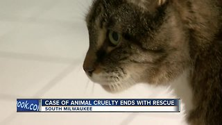 Case of animal cruelty ends with rescue