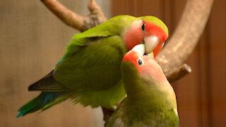 Love birds enjoy