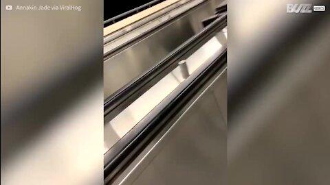 Equipamento alimentar cai em escadas rolantes