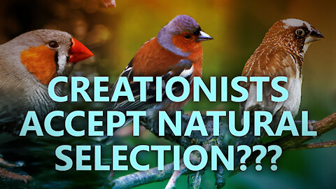 Creationists accept natural selection?