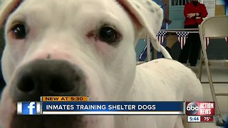 Adoption Ready: Inmates train dogs at local prison