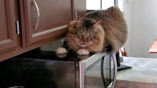 """Funny Cat - """"Purdy"""" making crazy eyes"""