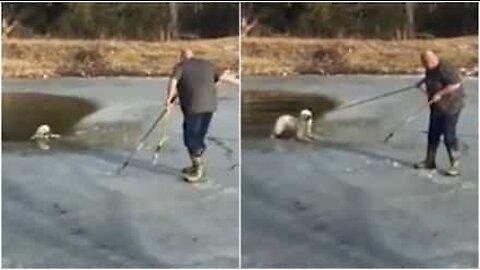 Pelastusoperaatio: fiksu koira ottaa hampaillaan kiinni köydestä päästäkseen ylös jäistä