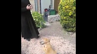 Dog prays before meal