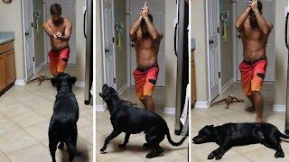 Dramatic dog gives Oscar-worthy performance