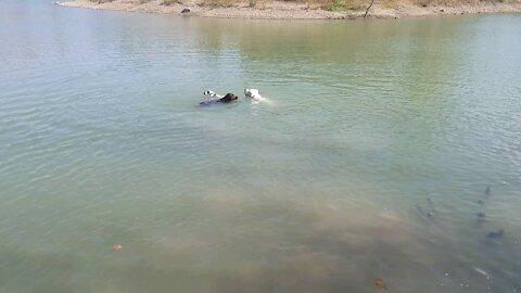 Echo's first swim