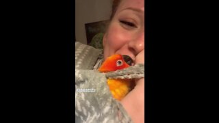 Sweet parrot literally cannot stop kissing owner goodnight