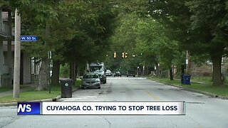 Cuyahoga county trying to stop tree loss