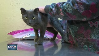 Possible cat abuse under investigation