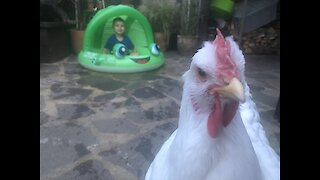 When a chicken comes into your video