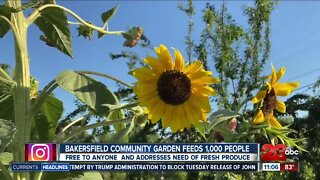 Bakersfield community garden feeds 1,000 people, addresses the need of produce