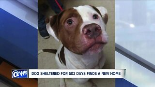 Patches finds new home after spending 602 days at Ashtabula County APL