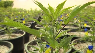 2 Democratic lawmakers from Northeast Ohio introduce legislation to legalize recreational marijuana