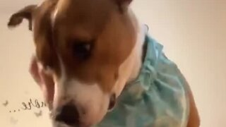 Dog feels unloved because owner has the audacity to work from home