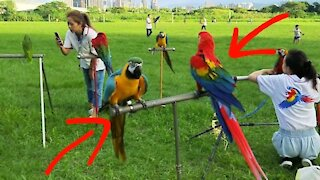 Watch these huge parrots