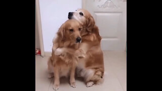 A dog hugging another dog
