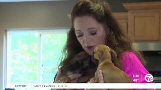 Nearly 50 reported puppy scams in metro Detroit in last 6 months cost people $67,000
