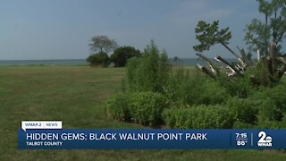 Visiting the Black Walnut State Park on the shores of the Choptank River