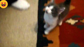 Lovely cats best sweet cat video