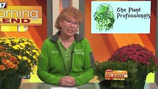 The Plant Professionals - 9/28/21