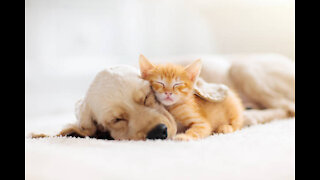 Funny pets & Cute animals