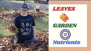 Fallen Leaves feeds next years Garden | Permaculture