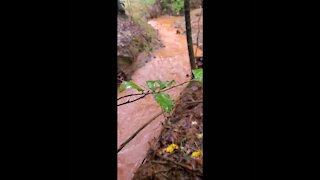 Rain Hike, Muddy Brooks and Streams, Part 1 of 2